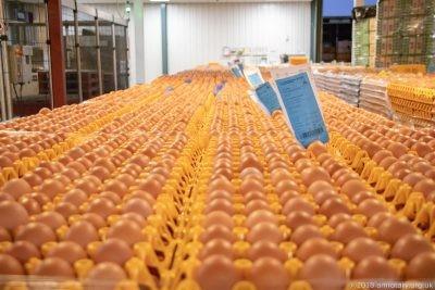 Fairburns Eggs